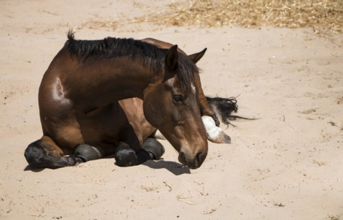 Horse-rolling-in-sand-Ronel-Lowe